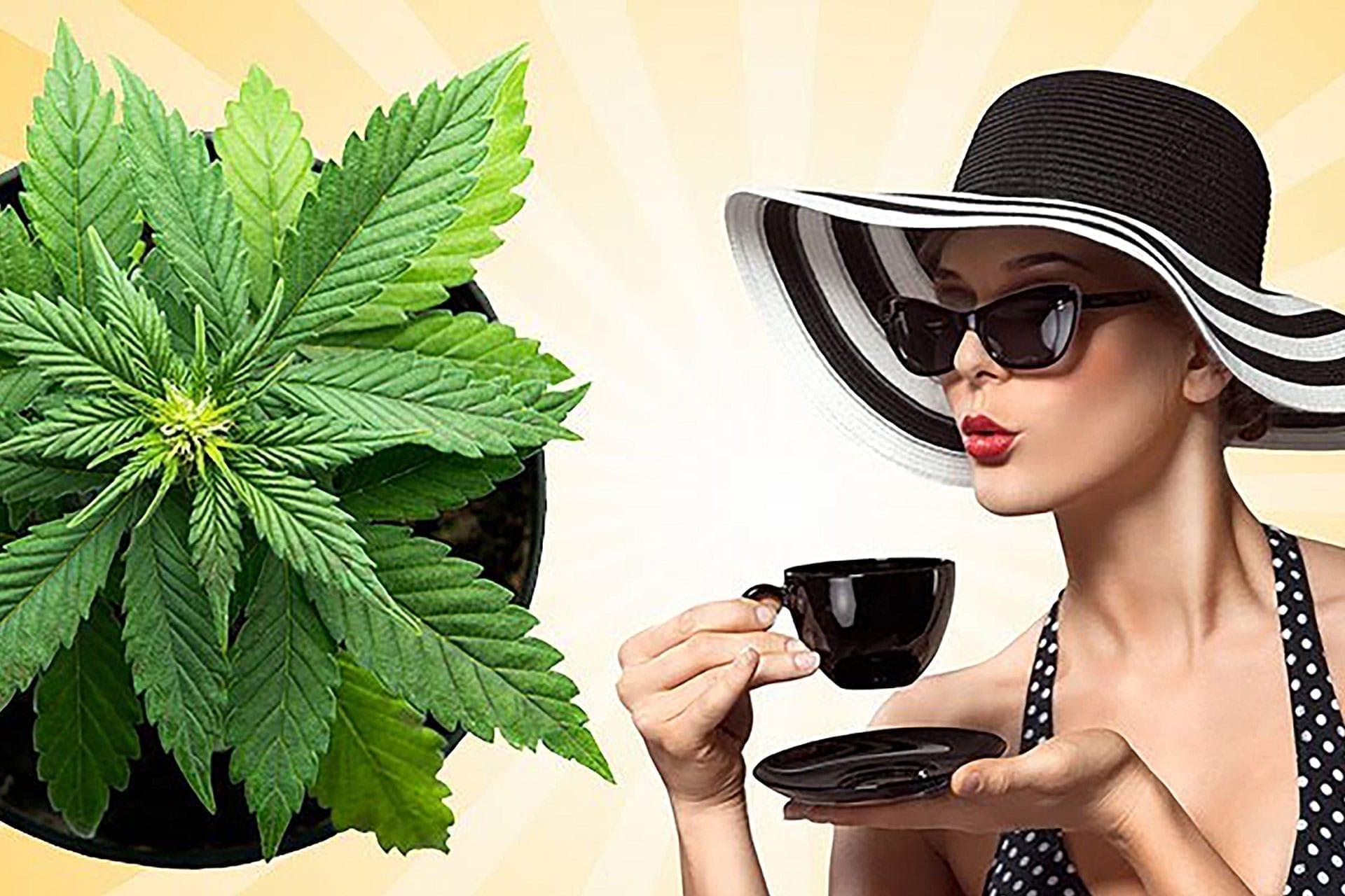 mjs-summercannabisevents